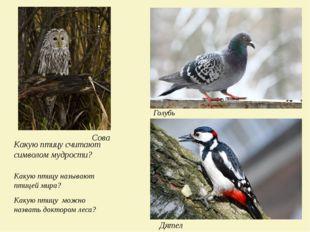 Какую птицу считают символом мудрости? Сова Какую птицу называют птицей мира?