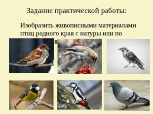 Задание практической работы: Изобразить живописными материалами птиц родного
