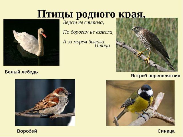 Птицы родного края. Верст не считала, По дорогам не езжала, А за морем бывала...