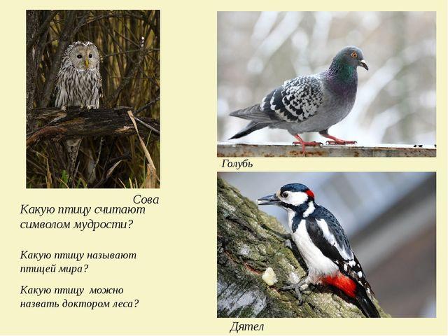 Какую птицу считают символом мудрости? Сова Какую птицу называют птицей мира?...