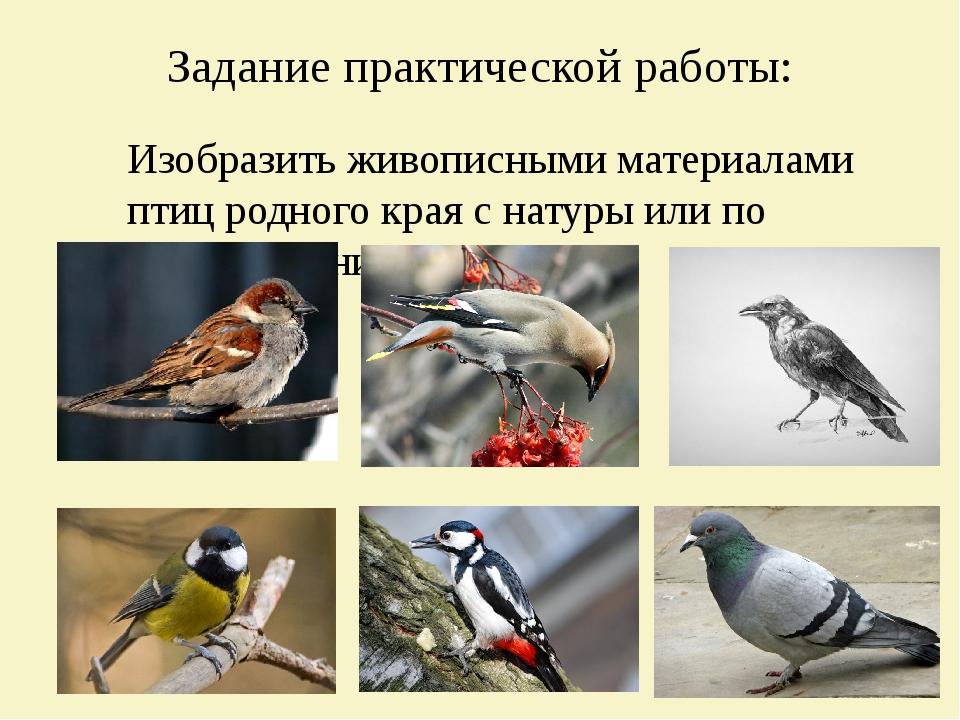 Задание практической работы: Изобразить живописными материалами птиц родного...