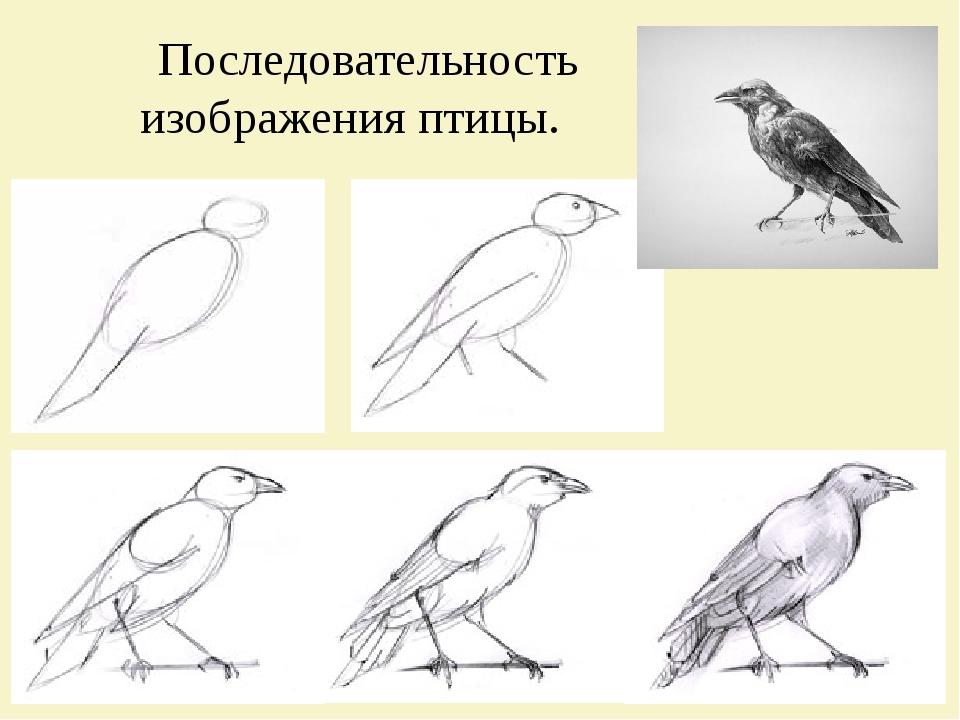 Последовательность изображения птицы.