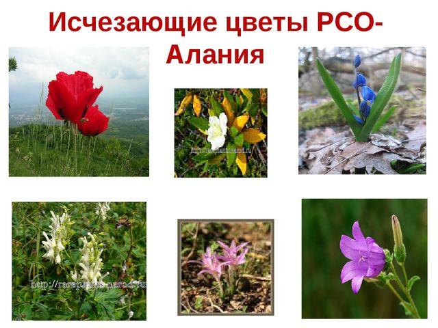 Исчезающие цветы РСО-Алания
