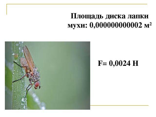Площадь диска лапки мухи: 0,000000000002 м2 F=0,0024Н