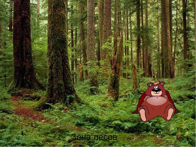 Зона лесов Зона лесов