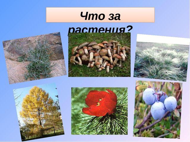Что за растения?