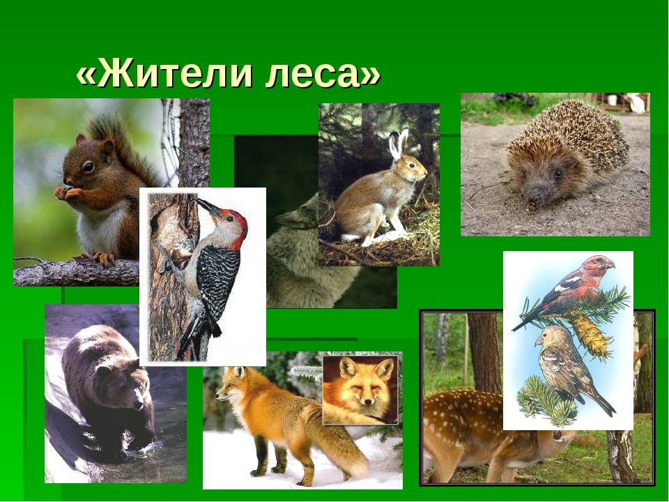 «Жители леса»