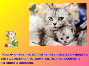 Кошки очень чистоплотны –вылизывают шерсть так тщательно, что, кажется, что