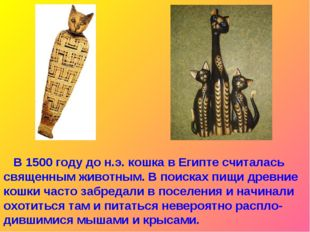В 1500 году до н.э. кошка в Египте считалась священным животным. В поисках п