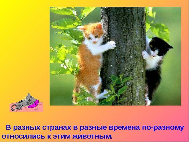 В разных странах в разные времена по-разному относились к этим животным.