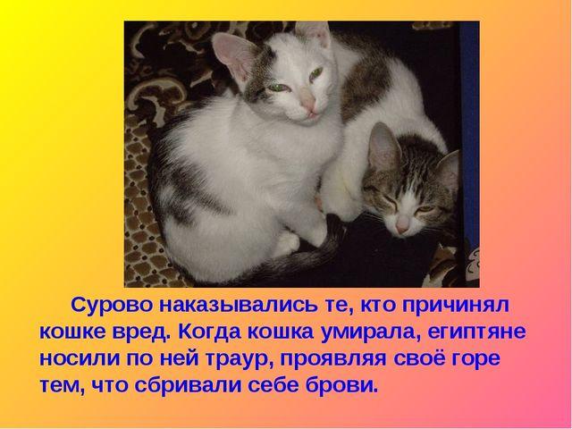 Сурово наказывались те, кто причинял кошке вред. Когда кошка умирала, египтя...