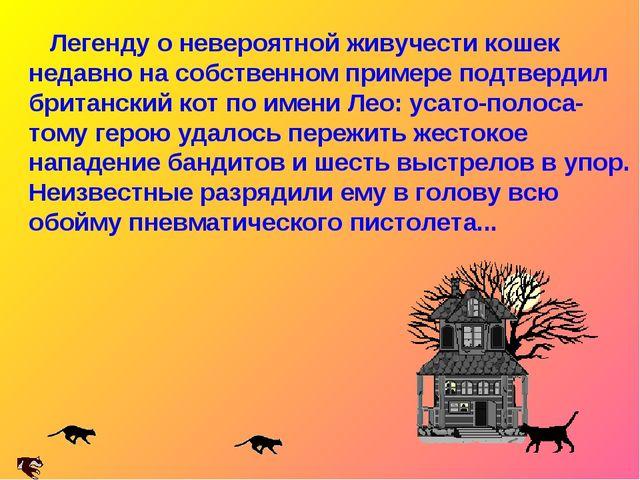 Легенду о невероятной живучести кошек недавно на собственном примере подтвер...