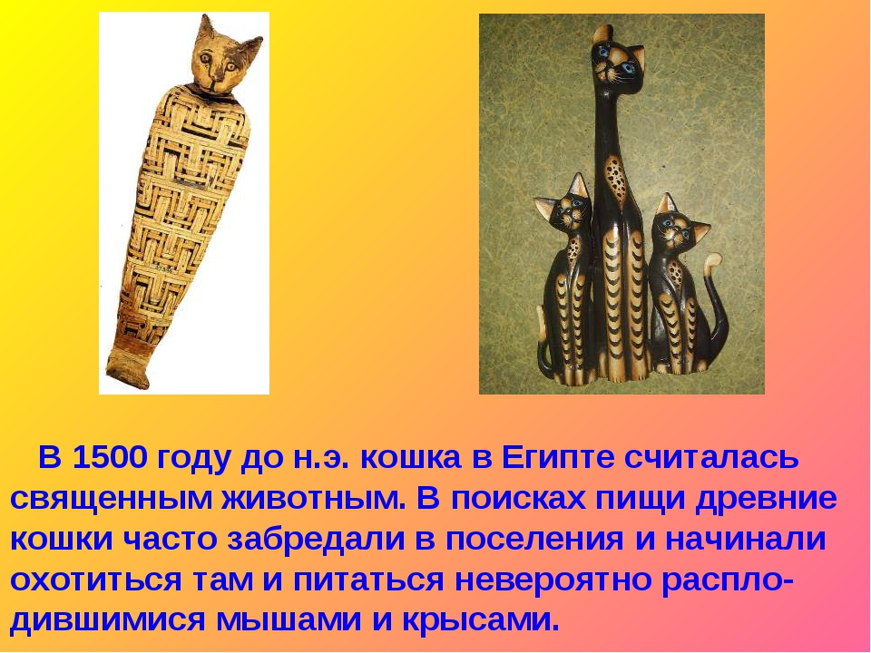 В 1500 году до н.э. кошка в Египте считалась священным животным. В поисках п...