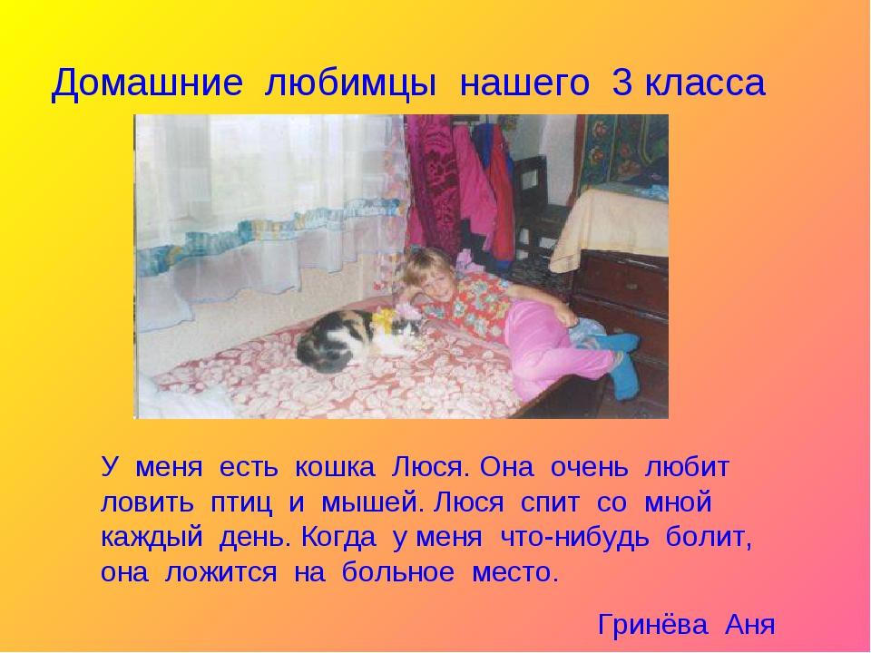 Домашние любимцы нашего 3 класса У меня есть кошка Люся. Она очень любит лови...