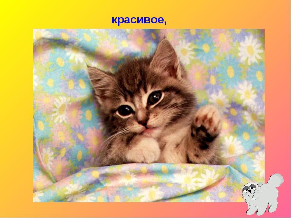 Открытки с кошкой привет