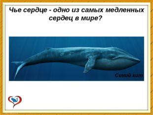Чье сердце - одно из самых медленных сердец в мире? Синий кит