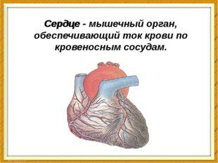 Сердце - Сердце - мышечный орган, обеспечивающий ток крови по кровеносным сос
