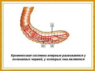 Кровеносная система впервые развивается у кольчатых червей, у которых она явл