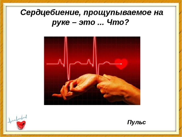 Сердцебиение, прощупываемое на руке – это ... Что? Пульс