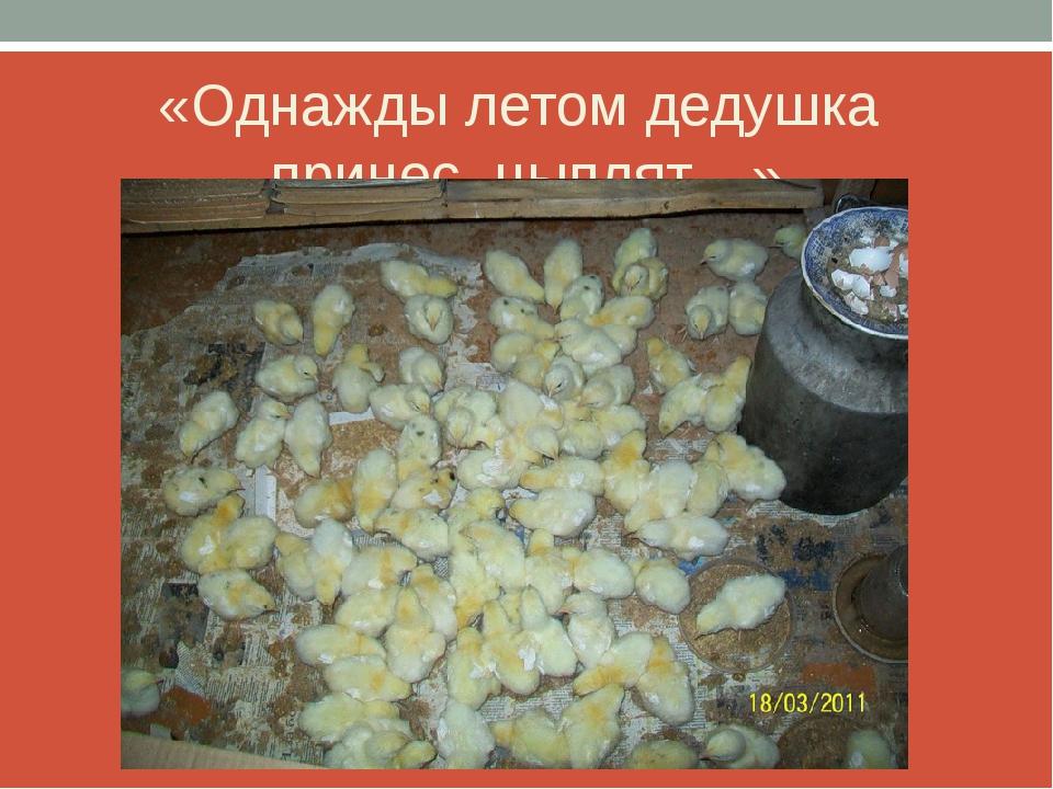 «Однажды летом дедушка принес цыплят…»