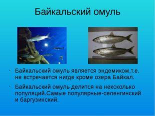 Байкальский омуль Байкальский омуль является эндемиком,т.е. не встречается ни