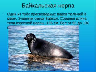 Байкальская нерпа Один из трёх пресноводных видов тюленей в мире. Эндемик озе