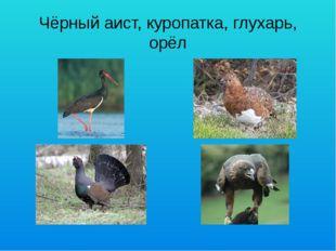 Чёрный аист, куропатка, глухарь, орёл