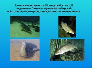 В озере насчитывается 52 вида рыб,из них 27 эндемичны.Самые популярные:сибирс