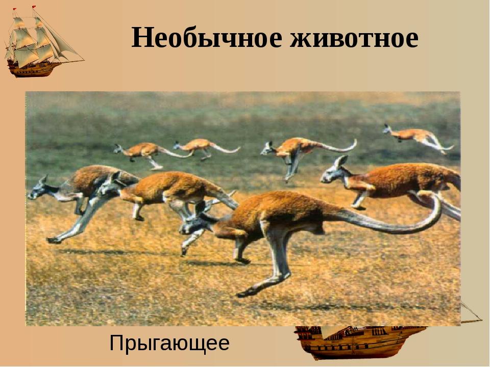 Необычное животное Прыгающее
