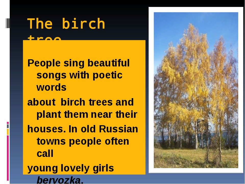 The birch tree People sing beautiful songs with poetic words about birch tree...