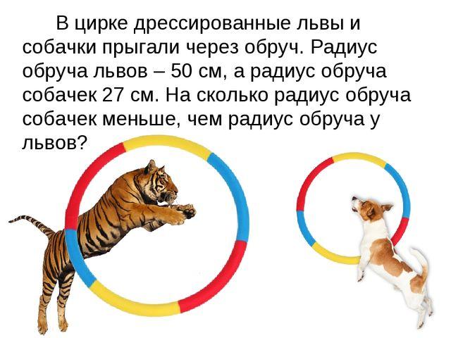 В цирке дрессированные львы и собачки прыгали через обруч. Радиус обруча льв...
