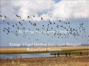 Viele Vögel fliegen weg. Sie fliegen in warme Länder. Einige Vögel bleiben hi