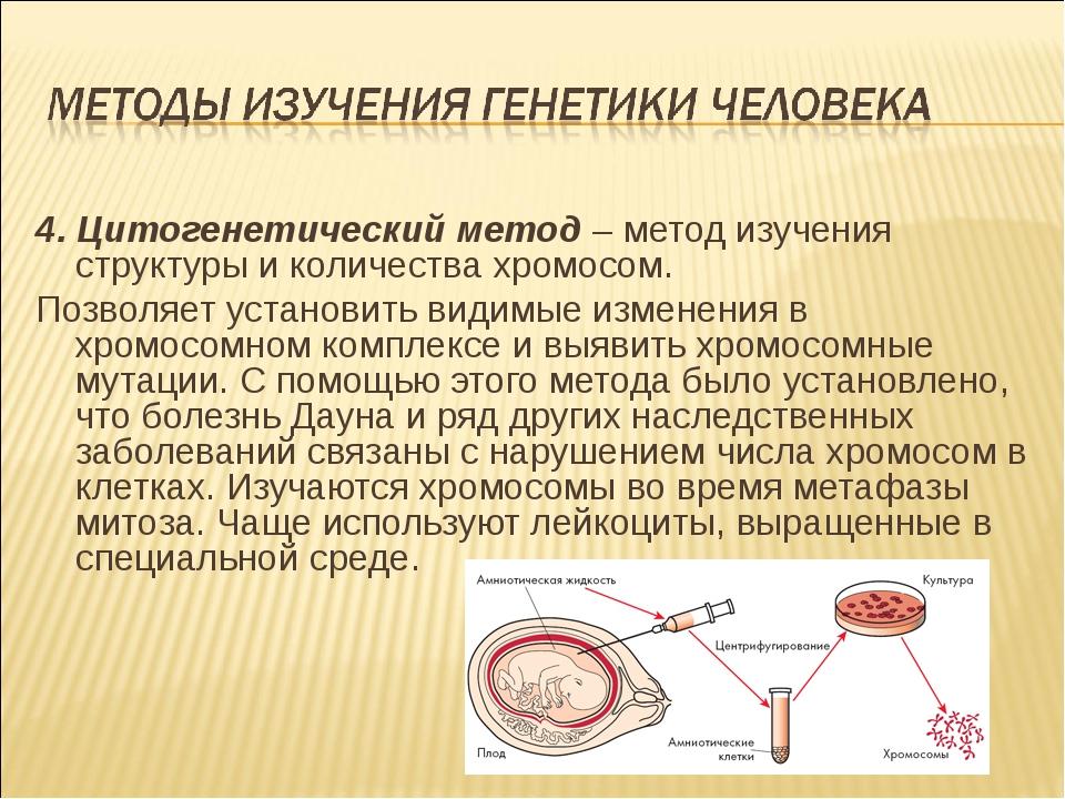 4. Цитогенетический метод– метод изучения структуры и количества хромосом. П...