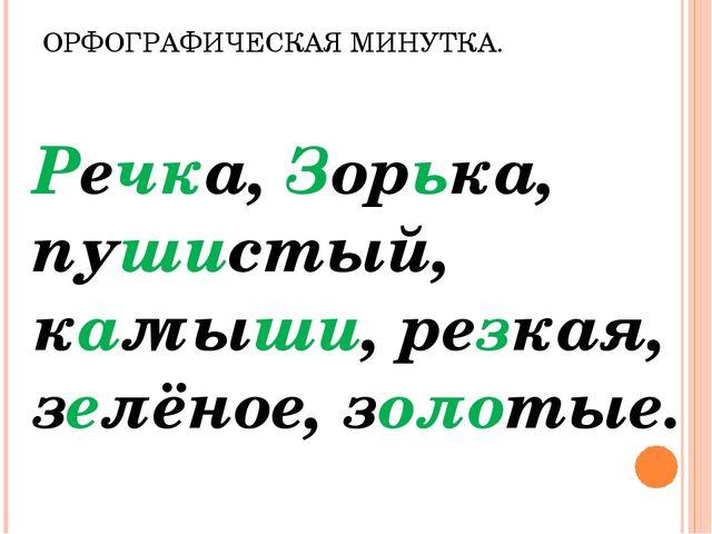 ОРФОГРАФИЧЕСКАЯ МИНУТКА. Речка, Зорька, пушистый, камыши, резкая, зелёное, зо...