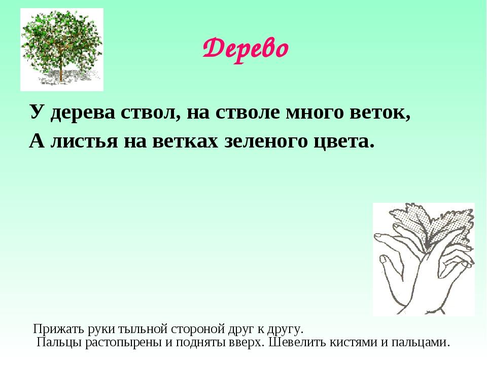 Дерево У дерева ствол, на стволе много веток, А листья на ветках зеленого цве...