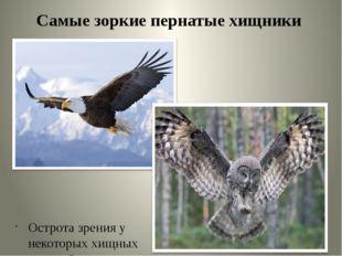 Самые зоркие пернатые хищники Острота зрения у некоторых хищных птиц в 8 раз