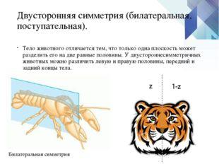 Двусторонняя симметрия (билатеральная, поступательная). Тело животного отлича