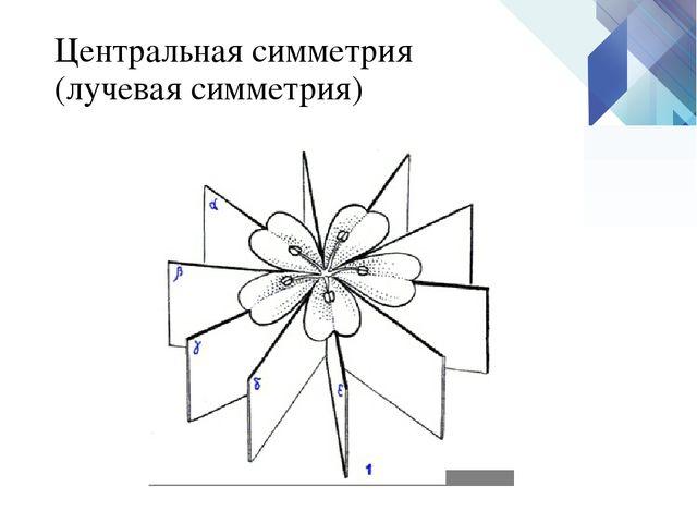 Центральная симметрия (лучевая симметрия)