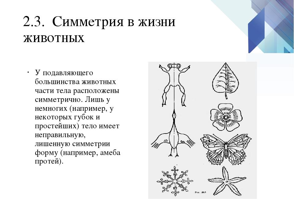 2.3. Симметрия в жизни животных У подавляющего большинства животных части тел...