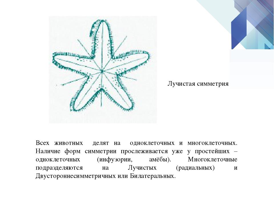 Всех животных делят на одноклеточных и многоклеточных. Наличие форм симметрии...