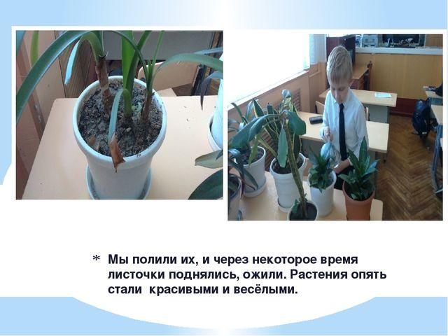 Мы полили их, и через некоторое время листочки поднялись, ожили. Растения опя...