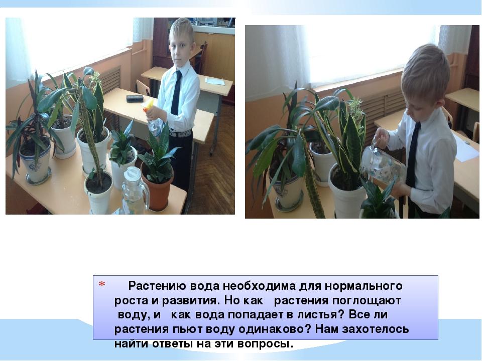 Растению вода необходима для нормального роста и развития. Но как  расте...