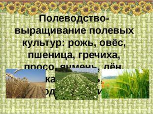 Полеводство- выращивание полевых культур: рожь, овёс, пшеница, гречиха, просо