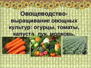 Овощеводство- выращивание овощных культур: огурцы, томаты, капуста, лук, морк