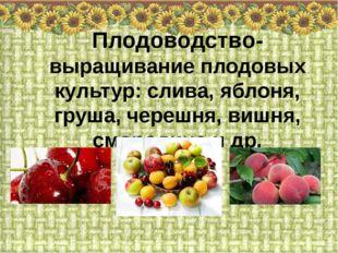 Плодоводство- выращивание плодовых культур: слива, яблоня, груша, черешня, ви