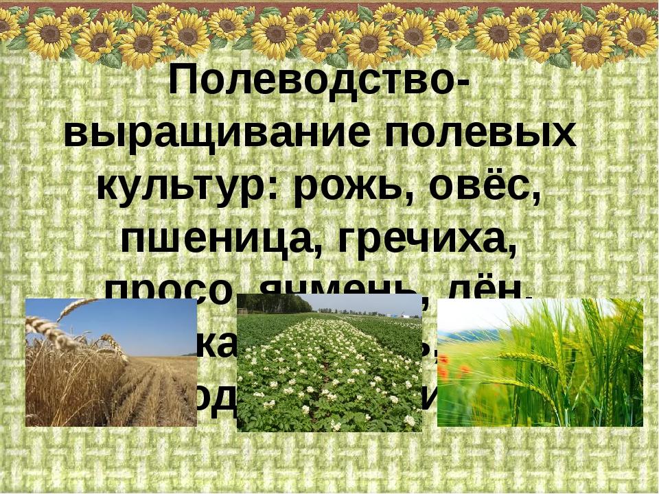 Полеводство- выращивание полевых культур: рожь, овёс, пшеница, гречиха, просо...