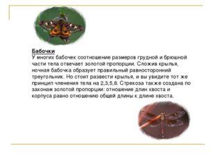 Бабочки У многих бабочек соотношение размеров грудной и брюшной части тела от