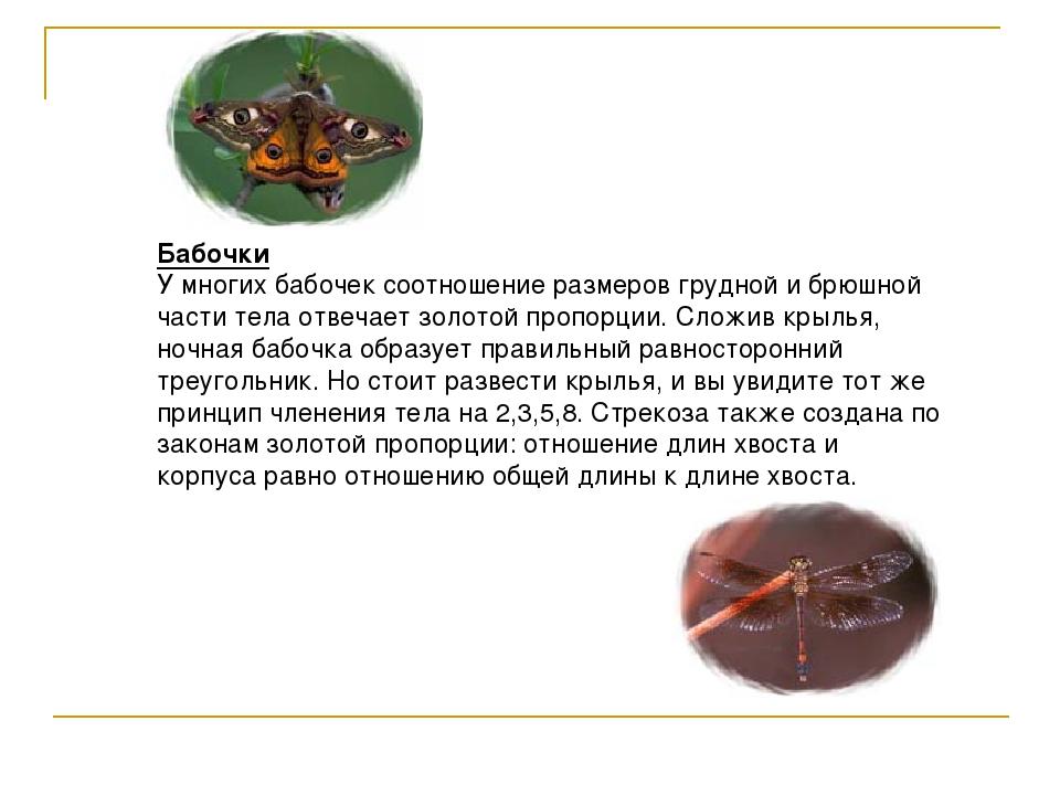 Бабочки У многих бабочек соотношение размеров грудной и брюшной части тела от...