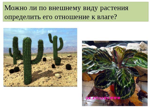 Можно ли по внешнему виду растения определить его отношение к влаге?