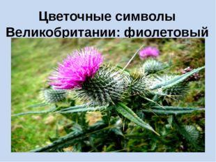 Цветочные символы Великобритании: фиолетовый чертополох Шотландии